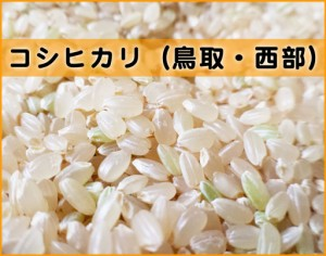 himeya-コシヒカリ鳥取西部